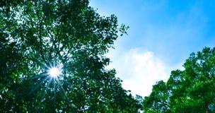 Mooi zonlicht en mooie blauwe hemelachtergrond Kijkt helder en vers royalty-vrije stock fotografie
