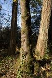 Mooi zonnig bos met oud boomboomstammen en mos, recreatief, vrede en vrij van aard, meditatie stock afbeeldingen