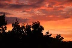 Mooi zonsondergangogenblik boven de boombovenkanten stock afbeelding