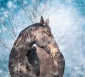 Mooi zwart paard op blauwe de dalingsachtergrond van de de wintersneeuw stock foto's
