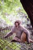 Mooie aap in schok of ontzagstaat Stock Foto's