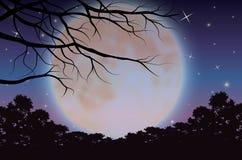 Mooie aard bij nacht, Vectorillustraties Stock Afbeelding