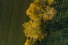 Mooie aard en landschapsfoto van kleurrijke de herfstdag in Zweden stock foto