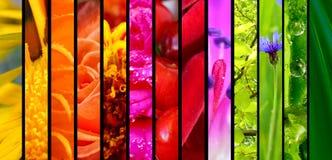 Mooie aard kleurrijke collage stock foto's