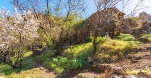 Mooie aard van Gran Canaria tijdens de amandelbloesem stock foto's