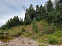 Mooie aard van Rusland bossen van Rusland Behandel aard 2 royalty-vrije stock afbeelding