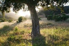 Mooie Aardachtergrond met Eiken Boom met Hoge Zonsondergang - kwaliteit Royalty-vrije Stock Fotografie