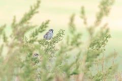 Mooie aardscène met de Muspasser van de vogel Europees-Aziatische Boom montanus stock fotografie