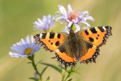 Mooie aardscène met vlinder stock afbeelding