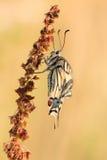 Mooie aardscène met vlinder royalty-vrije stock foto