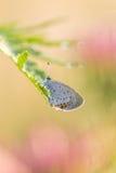 Mooie aardscène met vlinder royalty-vrije stock afbeeldingen