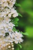 Mooie achtergrond met bloemen Lay-out voor ontwerp Stock Afbeelding