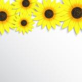 Mooie achtergrond met zonnebloemen Stock Afbeeldingen