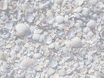Mooie achtergrond van overzeese shells Stock Foto