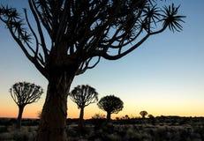Mooie Afrikaanse zonsondergang met gesilhouetteerde Quiver bomen Royalty-vrije Stock Afbeelding