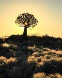 Mooie Afrikaanse zonsondergang met gesilhouetteerde Quiver bomen en verlicht gras Stock Fotografie