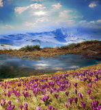 Mooie alpiene bloemen Royalty-vrije Stock Foto