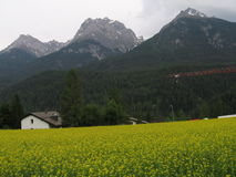 Mooie Alpiene weide Stock Afbeeldingen