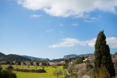 Mooie amandelbomen in Spaans landschap Stock Fotografie