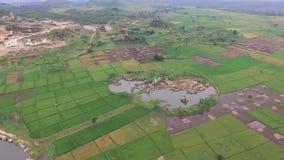 Mooie Antenne/hommelmening van padieveldgebieden in de slawistad Indonesië stock video