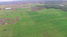 Mooie Antenne/hommelmening van padieveldgebieden in de slawistad Indonesië stock footage