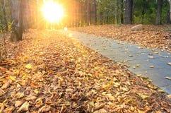 Mooie avondscène in de herfstpark met zonstralen Royalty-vrije Stock Afbeelding