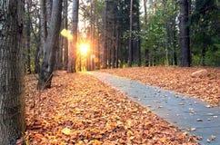 Mooie avondscène in de herfstpark met zonstralen Royalty-vrije Stock Foto's