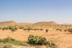 Mooie Aziatische savanne met dunne vegetatie royalty-vrije stock afbeeldingen