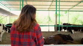 Mooie Aziatische vrouw of landbouwer met en koeien in koeiestal bij zuivel landbouwbedrijf-bewerkt, en veeteeltconcept stock footage