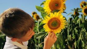 Mooie baby die, zonnebloem op de lentegebied, allergieën, ziekte, 1080p-video glimlachen stock video