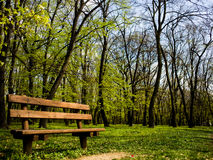 Mooie bank naast het bos Stock Afbeelding