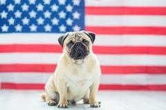 Mooie beige puppypug op de achtergrond van de Amerikaanse vlag op Onafhankelijkheidsdag Royalty-vrije Stock Foto