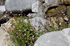 Mooie bergenbloemen Royalty-vrije Stock Afbeelding