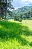 Mooie bergvallei in de Pyreneeën Stock Foto