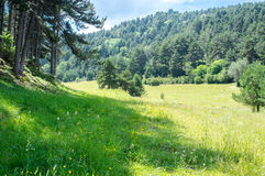 Mooie bergvallei in de Pyreneeën die door bos op een de zomer zonnige dag worden omringd, Royalty-vrije Stock Fotografie