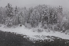 Mooie berijpte bomen Stock Foto's