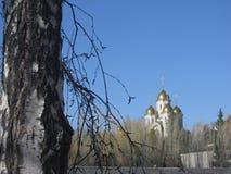 Mooie berk en de tempel stock foto
