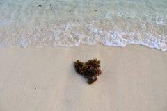 Mooie bespattende turkooise oceaangolven bij de witte stranden op het paradijseiland Seychellen stock afbeeldingen