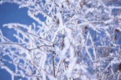 Mooie bevroren tak royalty-vrije stock fotografie