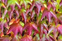 Mooie bladachtergrond Stock Foto's