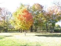 Mooie bladeren royalty-vrije stock afbeelding