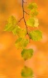 Mooie bladeren in de herfst Royalty-vrije Stock Foto's