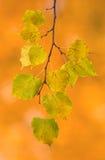 Mooie bladeren in de herfst Stock Foto's