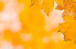 Mooie bladeren in de herfst Stock Afbeeldingen