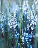 Mooie blauwe bloem stock afbeeldingen