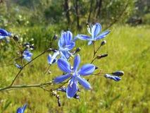 Mooie blauwe bloem op een weide in het hout Stock Fotografie