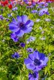 Mooie blauwe bloemen Stock Afbeeldingen