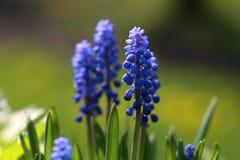Mooie blauwe bloemen op een groene achtergrond stock foto