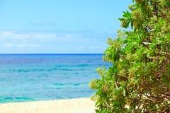 Mooie blauwe Hawaiiaanse wateren, struik in voorgrond Stock Fotografie