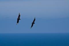Mooie blauwe hemel en het zwarte vogels vliegen Stock Foto's